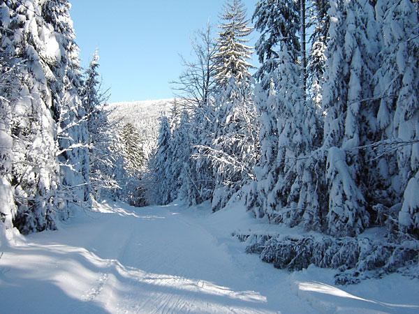 winter bayern wald